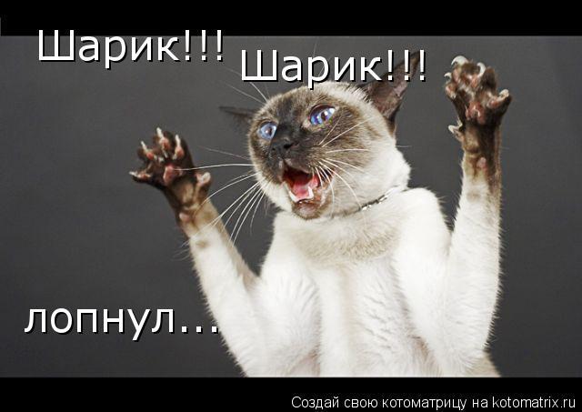 Котоматрица: Шарик!!! Шарик!!! лопнул...