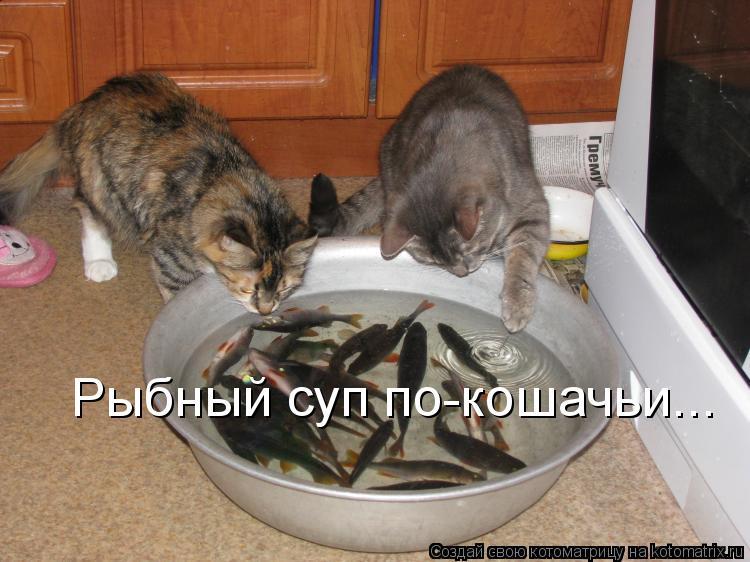 Котоматрица: Рыбный суп по-кошачьи...