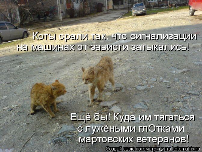 Котоматрица: Коты орали так, что сигнализации на машинах от зависти затыкались! Ещё бы! Куда им тягаться с лужёными глОтками мартовских ветеранов!