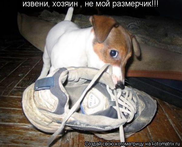 Котоматрица: извени, хозяин , не мой размерчик!!!