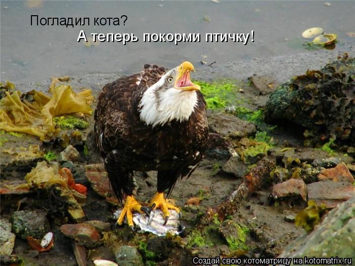 Котоматрица: Погладил кота? А теперь покорми птичку!