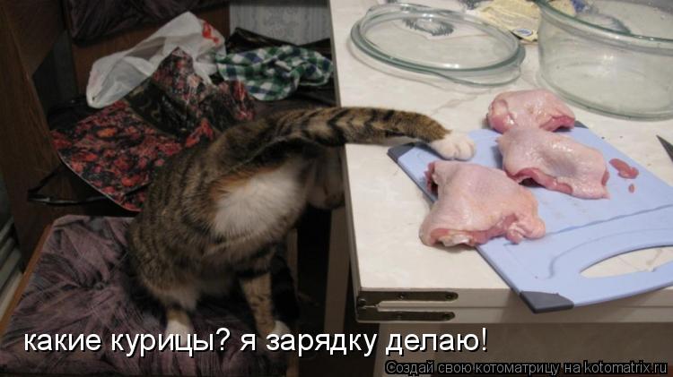 Котоматрица: какие курицы? я зарядку делаю!