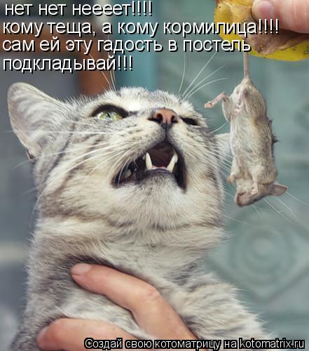 Котоматрица: нет нет неееет!!!! кому теща, а кому кормилица!!!! сам ей эту гадость в постель подкладывай!!!