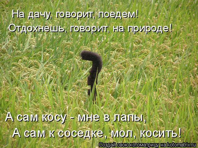 Котоматрица: На дачу, говорит, поедем! Отдохнешь, говорит, на природе! А сам косу - мне в лапы,  А сам к соседке, мол, косить!