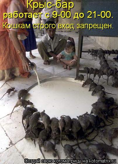Котоматрица: работает с 9-00 до 21-00. Крыс-бар Кошкам строго вход запрещен.