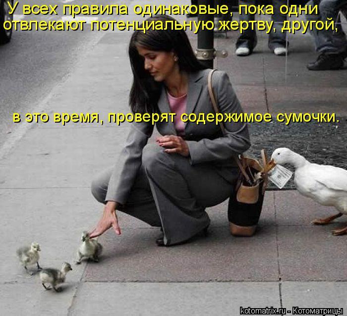 Котоматрица: У всех правила одинаковые, пока одни  отвлекают потенциальную жертву, другой,  в это время, проверят содержимое сумочки…