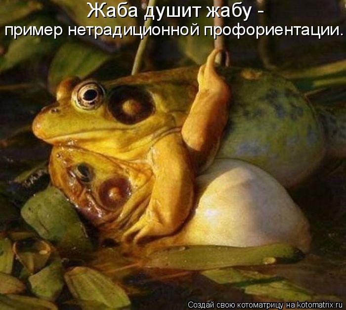 Котоматрица: Жаба душит жабу -  пример нетрадиционной профориентации.