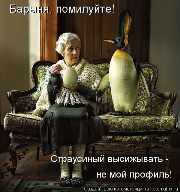 Котоматрица: Барыня, помилуйте! Страусиный высижывать -  не мой профиль!