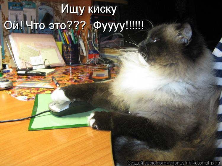 Котоматрица: Ищу киску Ой! Что это???  Фуууу!!!!!!