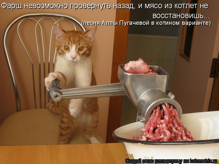 Котоматрица: Фарш невозможно провернуть назад, и мясо из котлет не  восстановишь... (песня Аллы Пугачевой в котином варианте)