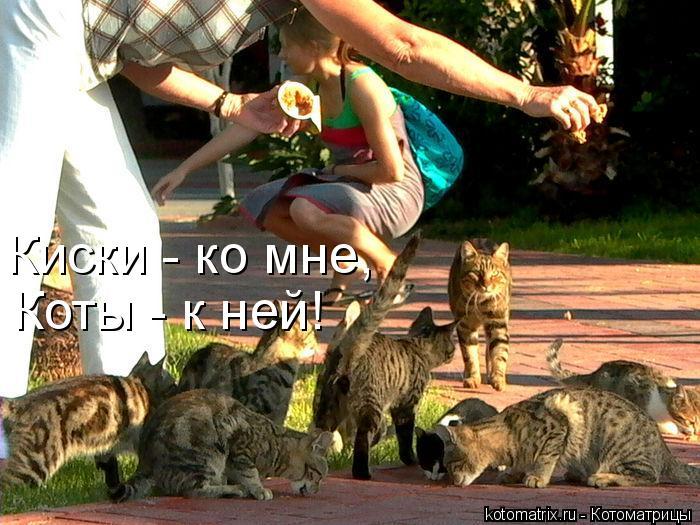Котоматрица: Киски - ко мне,  Коты - к ней!