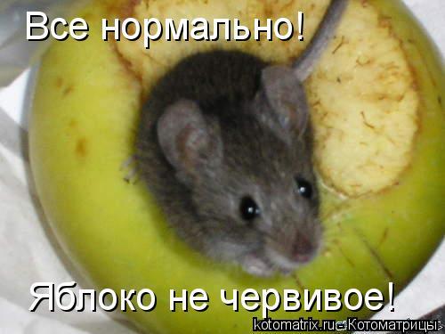 Котоматрица: Все нормально! Яблоко не червивое!