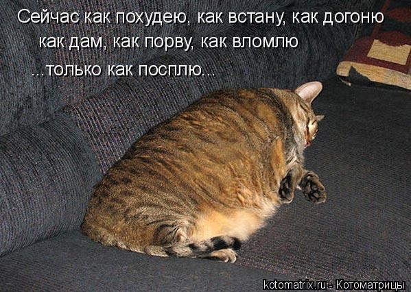 Котоматрица: Сейчас как похудею, как встану, как догоню как дам, как порву, как вломлю ...только как посплю...