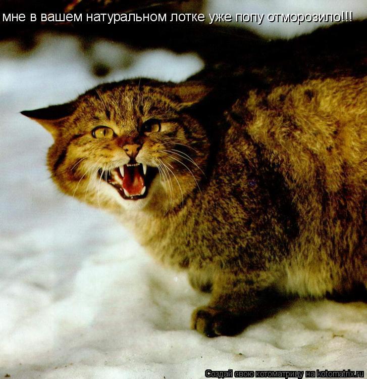 Котоматрица: мне в вашем натуральном лотке уже попу отморозило!!!