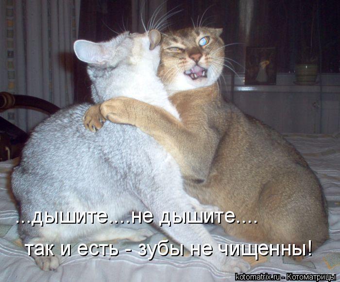 Котоматрица: ...дышите....не дышите.... так и есть - зубы не чищенны!