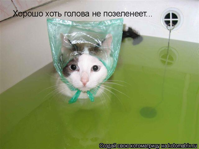 Котоматрица: Хорошо хоть голова не позеленеет...