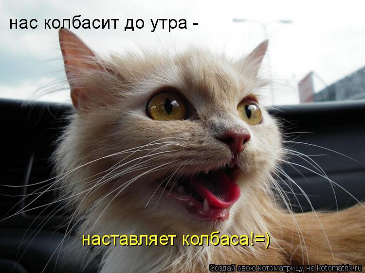 Котоматрица: нас колбасит до утра -  нас колбасит до утра -  наставляет колбаса!=)