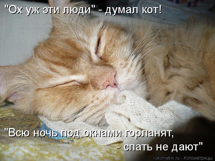 """Котоматрица: """"Ох уж эти люди"""" - думал кот! """"Всю ночь под окнами горланят,  - спать не дают"""""""