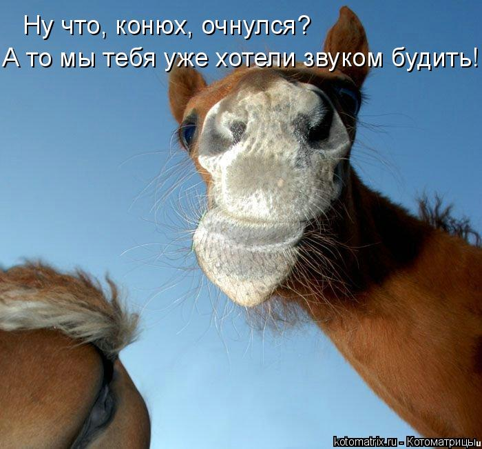Котоматрица: Ну что, конюх, очнулся? А то мы тебя уже хотели звуком будить!