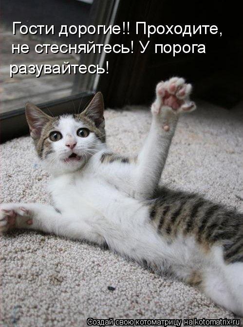 Котоматрица: Гости дорогие!! Проходите,  не стесняйтесь! У порога разувайтесь!