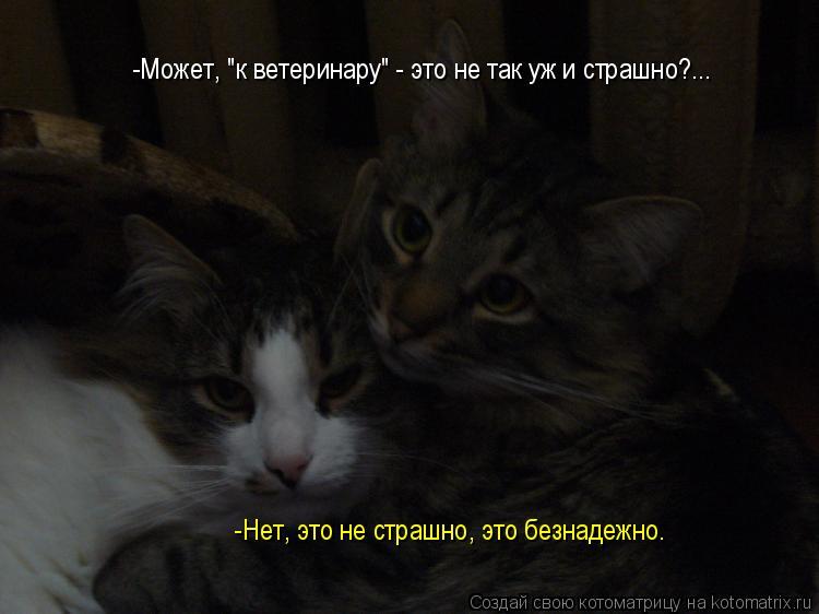 """Котоматрица: -Может, """"к ветеринару"""" - это не так уж и страшно?... -Нет, это не страшно, это безнадежно."""