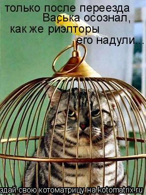 Котоматрица: только после переезда  Васька осознал,  как же риэлторы  его надули...