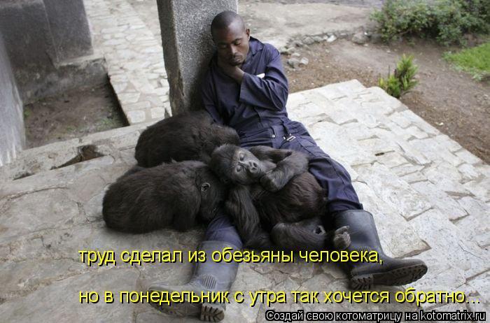 Котоматрица: труд сделал из обезьяны человека, но в понедельник с утра так хочется обратно...