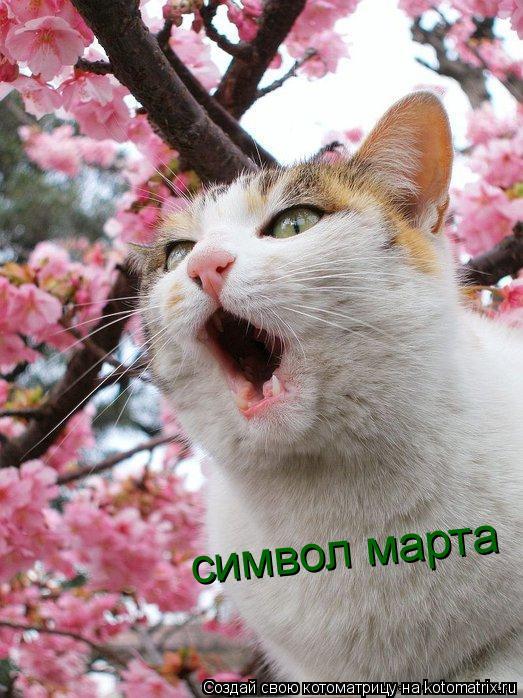 Котоматрица: символ марта