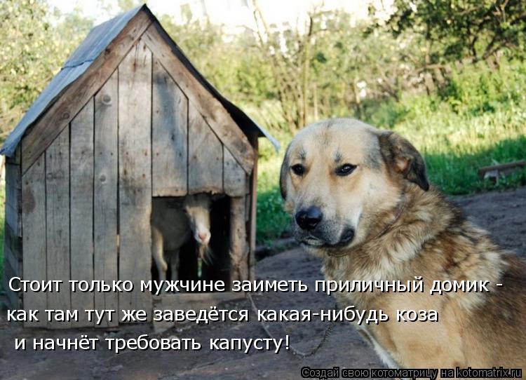 Котоматрица: как там тут же заведётся какая-нибудь коза Стоит только мужчине заиметь приличный домик - и начнёт требовать капусту!