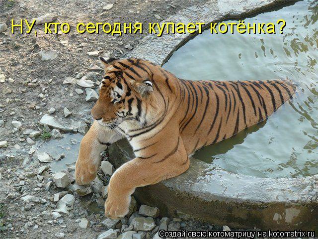 Котоматрица: НУ, кто сегодня купает котёнка?