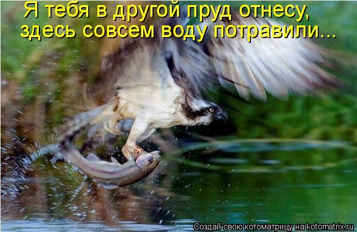 Котоматрица: Я тебя в другой пруд отнесу,  здесь совсем воду потравили...