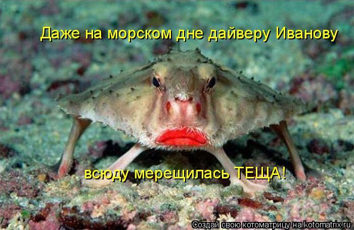 Котоматрица: Даже на морском дне дайверу Иванову всюду мерещилась ТЕЩА!