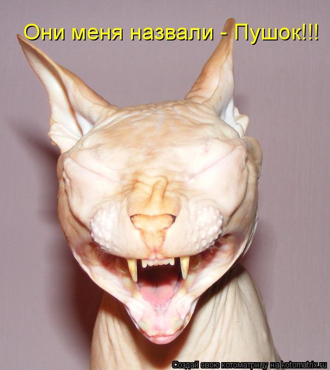 http://kotomatrix.ru/images/lolz/2010/04/17/548173.jpg