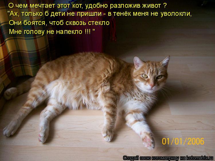 """Котоматрица: О чем мечтает этот кот, О чем мечтает этот кот, удобно разложив живот ? """"Ах, только б дети не пришли - в тенёк меня не уволокли, Они боятся, чтоб"""