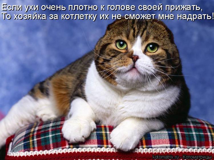 Котоматрица: Если ухи очень плотно к голове своей прижать, То хозяйка за котлетку их не сможет мне надрать!