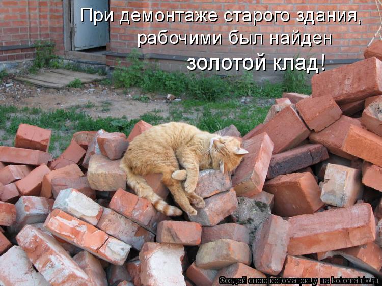 Котоматрица: При демонтаже старого здания, рабочими был найден золотой клад!