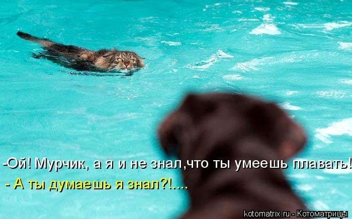 Котоматрица: - А ты думаешь я знал?!.... -Ой! Мурчик, а я и не знал,что ты умеешь плавать!