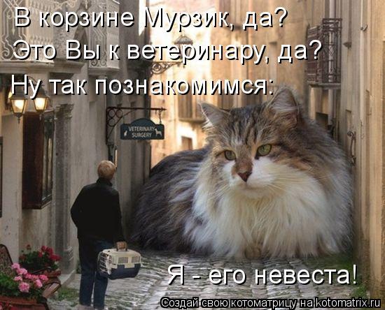 Котоматрица: В корзине Мурзик, да? Это Вы к ветеринару, да? Ну так познакомимся: Я - его невеста!