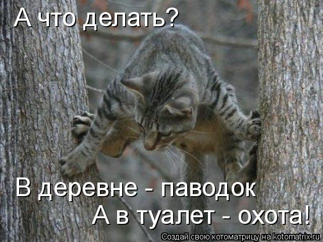 Котоматрица: А что делать? В деревне - паводок А в туалет - охота!