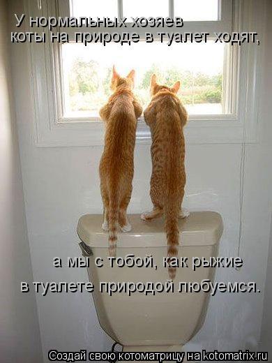 Котоматрица: коты на природе в туалет ходят, а мы с тобой, как рыжие в туалете природой любуемся. У нормальных хозяев