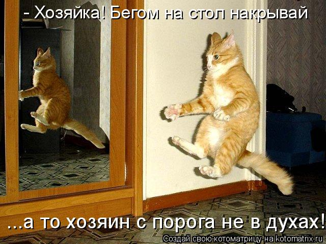 Котоматрица: - Хозяйка! Бегом на стол накрывай ...а то хозяин с порога не в духах!