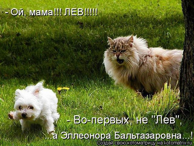 "Котоматрица: - Ой, мама!!! ЛЕВ!!!!! ...а Эллеонора Бальтазаровна...! - Во-первых, не ""Лев"","