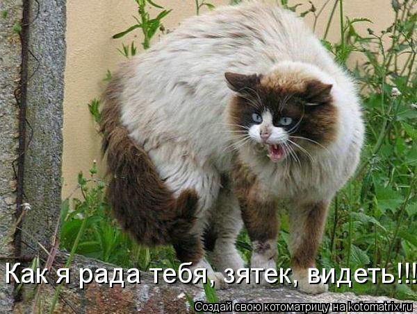 Котоматрица: Как я рада тебя, зятек, видеть!!!