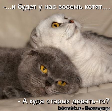 Котоматрица: -...и будет у нас восемь котят.... - А куда старых девать-то?