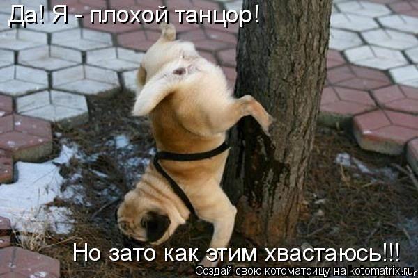 Котоматрица: Да! Я - плохой танцор! Но зато как этим хвастаюсь!!!