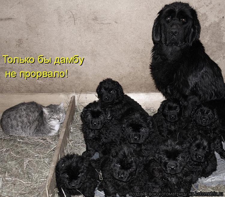 http://kotomatrix.ru/images/lolz/2010/04/18/549024.jpg