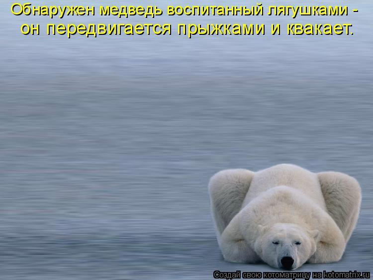 Котоматрица: Обнаружен медведь воспитанный лягушками -  он передвигается прыжками и квакает.