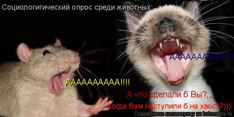 Котоматрица: АААААААААА!!!! АААААААААА!!!! А что сделали б Вы?,,, Когда Вам наступили б на хвост?))) Социологигический опрос среди животных: