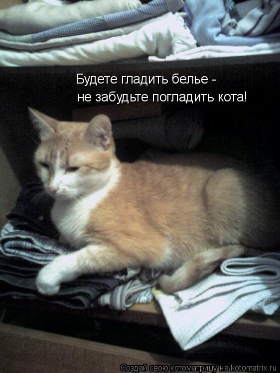Котоматрица: Будете гладить белье - не забудьте погладить кота!