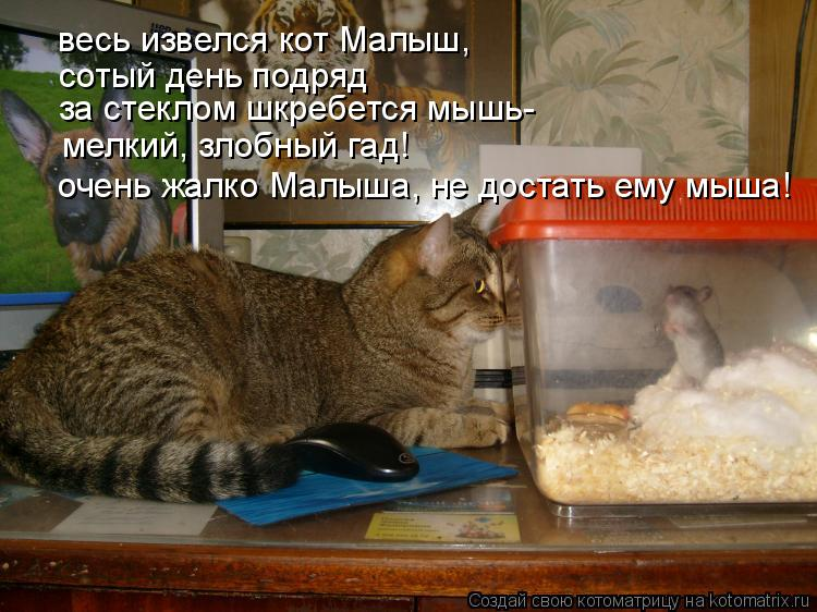 Котоматрица: весь извелся кот Малыш, сотый день подряд за стеклом шкребется мышь- очень жалко Малыша, не достать ему мыша! мелкий, злобный гад!